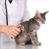 Ветеринарные клиники в Волгодонске
